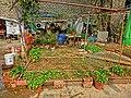 HK 油麻地 Yau Ma Tei 九龍華仁書院 Kowloon Wah Yan College back yard gardening Jan-2014 001.JPG