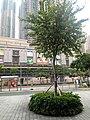 HK TKL 調景嶺 Tiu Keng Leng 香港知專設計學院 HKDI 李惠利工業學院 LWL campus June 2018 LGM 14 green trees n plants 01.jpg