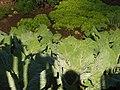 HORTA - panoramio.jpg