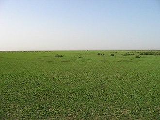 Hafar Al-Batin - Image: Hafar Al Batin in Spring 001