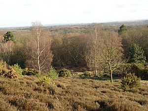 Hambledon, Surrey - Hambledon Heath or Hurst