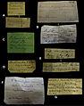 Handwriting of labels in mollusc collection in Museum für Naturkunde Berlin - ZooKeys-279-001-g001.jpg
