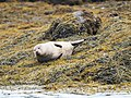 Happy Seal (221746135).jpeg