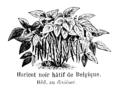 Haricot noir hâtif de Belgique Vilmorin-Andrieux 1904.png