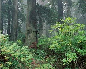 Headwaters Forest Reserve - Wikipedia