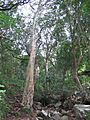 Helderberg Nature Reserve - Talus Forests 3.JPG