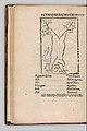 Herbarium MET DP327891.jpg