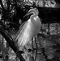 Heron - Andrea Westmoreland.jpg