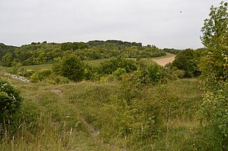 Herts and Middlesex Wildlife Trust - Hexton Chalk Pit