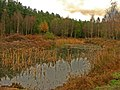 Hidden Gem - Autumn - geograph.org.uk - 661737.jpg