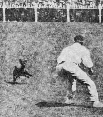 Clem Hill - Hill attempts to stop a pitch invading dog in the Fourth Test in Melbourne in 1908.