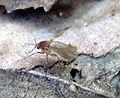 Hmyz08654.JPG