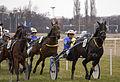 Horse Races 003 (8605822341).jpg