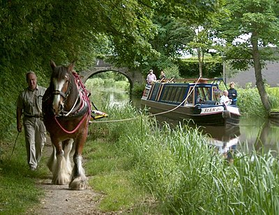 Horse drawn cruising on the Montgomery Canal - geograph.org.uk - 846074.jpg
