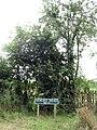 Horses Head - geograph.org.uk - 911115.jpg