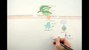 File: come funziona Poison Ivy.webm
