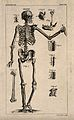 Human skeleton and bones; ten figures. Engraving by T. Jeffe Wellcome V0008429.jpg