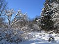 Humber Valley Trail (2164106705).jpg