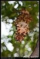 Hymenoptera (6022579316).jpg