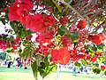 IMG 1289 Flowers.jpg