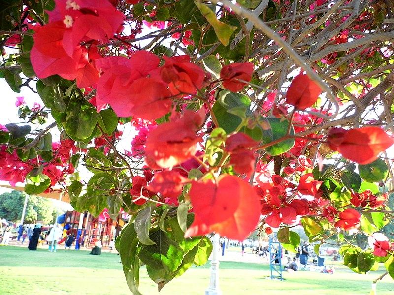 File:IMG 1289 Flowers.jpg