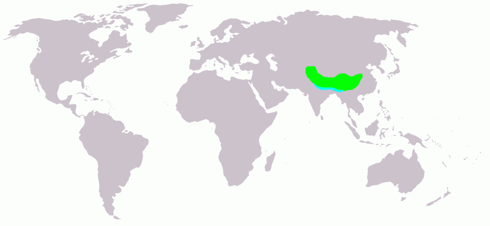 Ibidorhyncha struthersii map