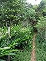 Ilhabela - SP - panoramio.jpg