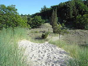 Indiana Dunes State Park - Forest growing on dunes