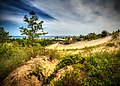 Indiana Dunes State Park, 2013.jpg