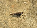 Insect IMG 9558.jpg