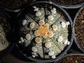 "Iran-qom-Cactus-The greenhouse of the thorn world گلخانه کاکتوس ""دنیای خار"" در روستای مبارک آباد قم- ایران 44.jpg"