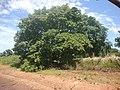 Itarumã - State of Goiás, Brazil - panoramio (11).jpg