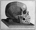J. Fox, The natural history and diseases of Wellcome L0030634.jpg