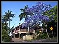 Jacaranda on street Sandgate-1 (6291277442).jpg