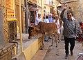 Jaisalmer-14-Kuh-2018-gje.jpg
