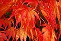 Japanese Garden (15877023781).jpg