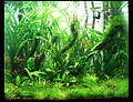 Jardinacuatico1500.jpg