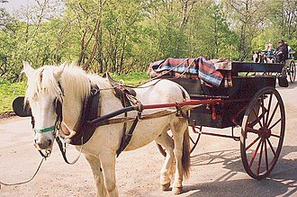Killarney National Park - Jaunting cars bring tourists around the park.