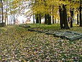 Jewish cemetery in Leżajsk (Poland)4.jpg