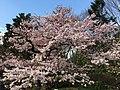 Jindai Botanical Garden-15.jpg