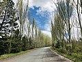 Jrvezh Forest, Armenia - Ջրվեժի անտառ, Հայաստան.jpg