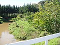 Juglans ailantifolia Carrière (AM AK289845-5).jpg