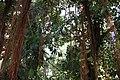 Jungle Room at USBG Conservatory (8576931633).jpg