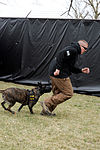 K-9 training 150319-F-OH119-381.jpg