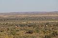 Karoo National Park 2014 14.jpg