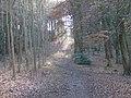 King's Wood - geograph.org.uk - 147718.jpg