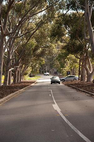 Tourist Drives in Western Australia - Image: Kings Park WA aug 2012 gnangarra 16