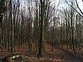 Kings Wood. - geograph.org.uk - 292436.jpg