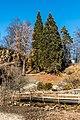 Klagenfurt Villacher Vorstadt Botanischer Garten Sequoiadendron giganteum 29012018 2519.jpg