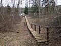 Koka taka uz Motrines ezeru, 09.04.2016 - panoramio.jpg